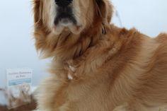 Food Inc, Food Recalls, Dog Died, Animals Images, Pet Health, Cute Dogs, Pets, Pet Food, Golden Retrievers