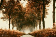 the rusty lane by Lars van de Goor #xemtvhay