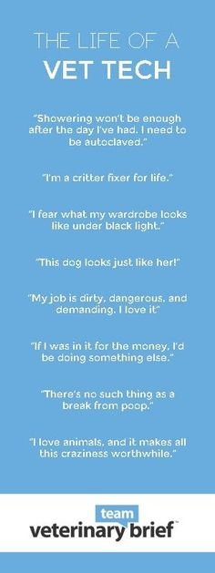 The Life of a Vet Tech by Veterinary Team Brief