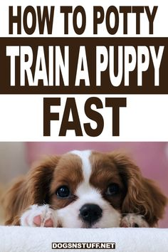 Puppy Training Tips, Training Your Puppy, Potty Training Puppies, Dog Obedience Training, Dog Training Treats, Dog Training Videos, Puppies Tips, Best Puppies, Puppy Supplies