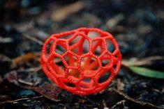Clathrus Ruber #mycology #fungi #mushrooms #Mushroom #BeatrixPotter #nature #Ambleside #fungus #science #mushroomsociety #shrooms