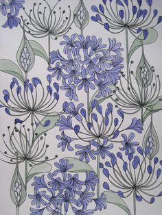 Agapanthus - Faye Baines, ink and watercolour. www.fayebaines.weebly.com
