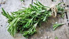 9 pravidel, jak správně pěstovat rozmarýn lékařský (Rosmarinus officinalis) Jak a proč rozmarýn pomáhá zdraví. Nejlepší recepty s rozmarýnem Korn, Tex Mex, Green Beans, Health Fitness, Vegetables, Cooking, Plants, Flowers, Herbs