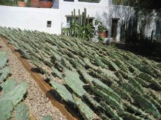 Weeds and Walls: Arizona Green Roof Landscape Architecture, Landscape Design, Outdoor Projector, Living Roofs, Earthship, Roof Design, French Country Style, Water Slides, House Roof
