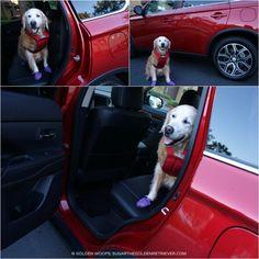 Mitsubishi Outlander Dog Approved