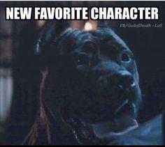 YES! Good dog.
