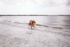 """My recent travel story on Florida beaches generated some nice email responses, including a terrific request from reader Jeanine Vaerewyck of Orlando:  """"With so many dog people around, could you..."""