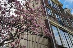Amsterdam Travel: Where to Find Cherry Blossom in Amsterdam : As the Bird flies... Travel, Writing, and Other Journeys Travel Advice, Travel Guides, Travel Tips, Amsterdam Travel Guide, Amsterdam Things To Do In, Cherry Blossom, Fairytale, Bird, Writing
