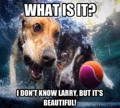 Too funny, two dogs going after a ball lol