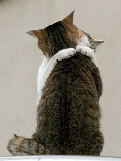 gute nacht katzenfotos | Die besten 17 Bilder zu Kitty Kaboodlies auf Pinterest | Ich Liebe ...