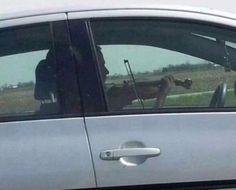 Me when viva la vida comes on in the car