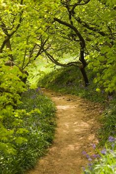 Trendy summer nature photography pathways - Welcome to our website, We hope you are satisfied with the content we offer. Summer Nature Photography, Tree Photography, Beautiful World, Beautiful Places, Beautiful Pictures, Forest Path, Walk In The Woods, Garden Paths, Nature Pictures