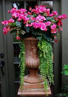 Shade Container - Begonia and 'Creeping Jenny'
