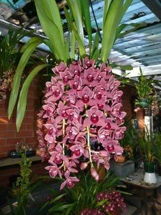 La Orquídea y sus asombrosas formas #hangingorchids