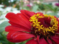 Fairyhungary: Nyár, virágok... Plants, Plant, Planets