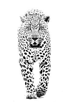 Genio y figura.... Jaguar Tattoo, Tiger Tattoo, Leopard Tattoos, Stippling Art, Lion Art, Pyrography, Big Cats, Animal Drawings, Animal Photography