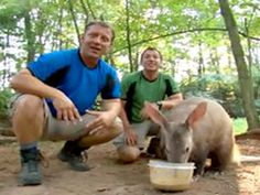 <p>Learn about the protein-packed breakfast that aardvarks love — full of insects! Viewers learn that the insectivores' favorite insects are termites and ants.</p>