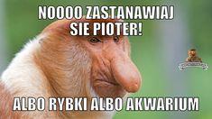 Memy i generator memów o typowej polskiej rodzinie Januszu Nosacz, Grażynie Nosacz, Pioterze Nosacz i ich somsiadach. Satyra ze stereotypowego zachowania Polaka. W główne role memów wcielają się wdzięczne nosacze sundajski Best Memes, Funny Memes, Lol, Humor, Anime, Humour, Funny Photos, Cartoon Movies, Anime Music