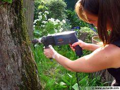 La dévitalisation d'une souche d'arbre : toutes les méthodes,  dont celle avec de l'ail qui fonctionne bien et est sans risques.