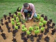 Plantio de mudas na jardinagem  Seja em cova, seja em canteiros, é importante fazer a rega da área, molhando bem o solo    Leia mais: http://www.cpt.com.br/noticias/plantio-mudas-jardinagem#ixzz3GPnEuc7V