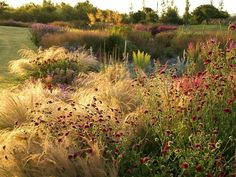 Establish a prarie-style garden http://www.entomology.umn.edu/cues/extpubs/6748prairie/DG6748b.html eller http://www.extension.umn.edu/garden/yard-garden/landscaping/establishing-and-maintaining-a-prairie-garden/