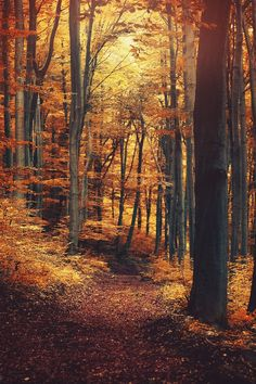 Fall nature photography forest paths 48 ideas for 2019 Fall Pictures, Pretty Pictures, Autumn Scenes, All Nature, Photos Of Nature, Nature Gif, Walk In The Woods, Belle Photo, Autumn Leaves