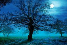 In moonlight...