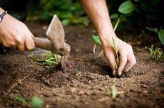 Novos Rurais: Calendário de plantações para o ano inteiro