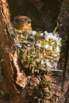 Bird on her nest.