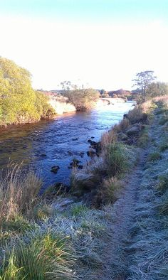Frosty at the river Deveron early November 2013