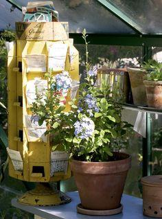 Näin saat kasvihuoneen kukoistamaan:: Istutuspöydältä alkaa kukkasten taival kohti istutusta ulos tai kasvihuoneeseen. Pöydällä on kokoelma viime kesänä itse kerättyjä siemeniä. Ruukussa kasvaa sinilyijykukka (Plumbago auriculata).