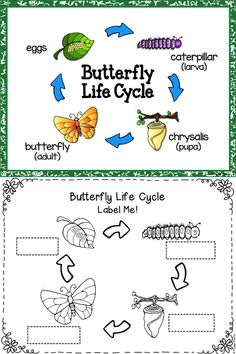 Butterfly Life Cycle Science and Literacy Activities – This is a great spring… Farm Animals Preschool, Preschool Science, Teaching Science, Kindergarten Activities, Preschool Crafts, Montessori Elementary, Elementary Science, Butterfly Life Cycle, Up Book