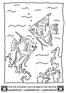 Angel Fish Coloring Book Page Pages Animal Of