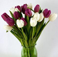 Tulips.com
