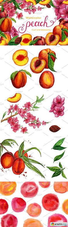 Watercolor peaches set  stock images