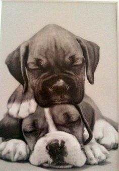 Boxer puppies - Tap the pin for the most adorable pawtastic fur baby apparel! You'll love the dog clothes and cat clothes! Boxer And Baby, Boxer Love, Baby Dogs, Cute Puppies, Cute Dogs, Dogs And Puppies, Doggies, Chihuahua Dogs, Labrador Golden