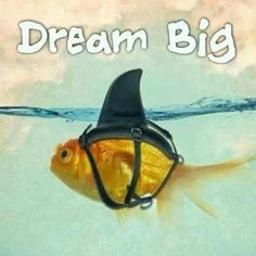 Dream big.