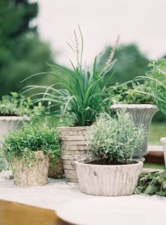 Organic Potted Plant Centerpieces #GrowYourOwnWedding