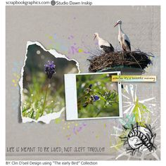Early Bird Collection by dawn Inskip