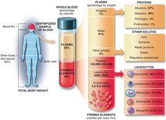 Η σύσταση του αίματος. blood components diagram