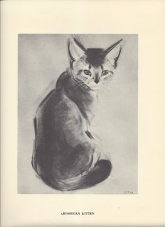 Abyssinian Kitten Print Cats and Kittens Clare Turlay Newberry Vintage