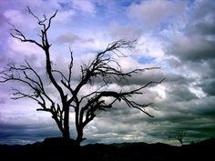 : Photo by Photographer Philip Cozzolino - photo.net