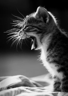 I need a cat nap - Cutest Paw I Love Cats, Cute Cats, Funny Cats, Crazy Cat Lady, Crazy Cats, Kittens Cutest, Cats And Kittens, Photo Animaliere, Cat Boarding