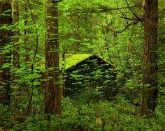 moss cabin   Forgotten, cabin, forest, green, moss, nature