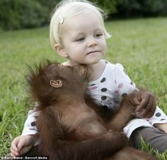 'I wanna be like you': A Junglebook jolly as toddler Emily and baby orangutan Rishi monkey around together