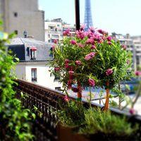 24 meilleures images du tableau collections de jardini res d 39 t balconies gardens et gardening - Plantes pour jardiniere toute l annee ...