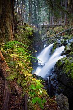 Autumn on the Sol Duc, Olympic National Park, Washington