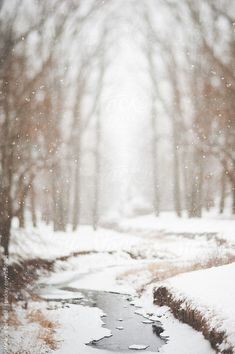 Winter /