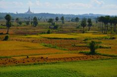 Agriculture sector remains the important role of Myanmar economy.Agriculture and the processing of agricultural products provides a majority of the employment and income in Myanmar.    Place-Beautiful agricultural field around Mandalay Region of Myanmar :)    Photo-Tone Tone Haythar