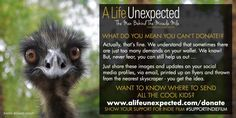 Life Unexpected, What Do You Mean, The Man, Champion, Canning, Home Canning, Conservation